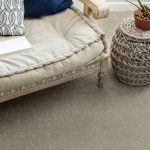Pawparazzi Carpet | Baycountryfloors